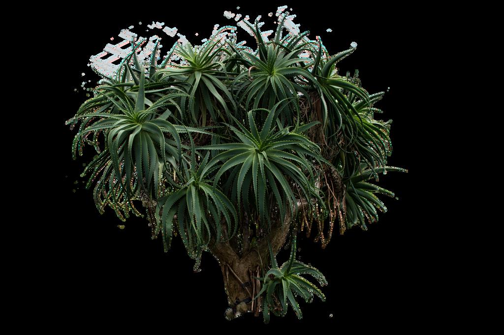 Palm Tree Stock..