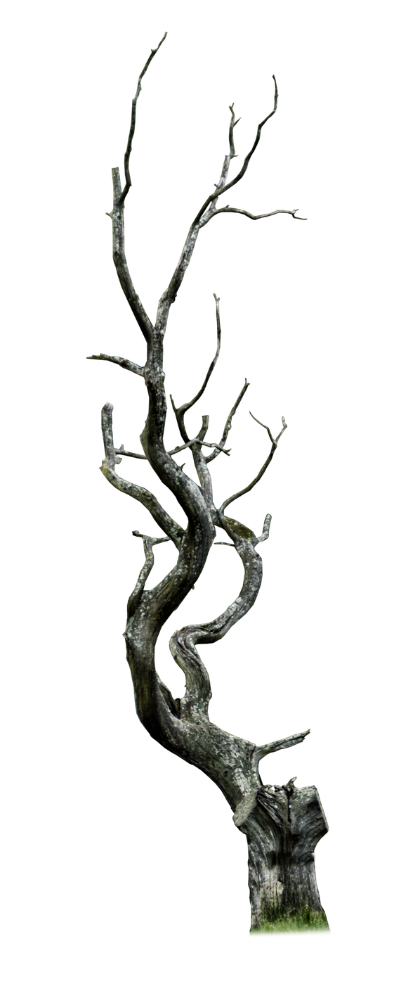 سكرابز اشجار صور اشجار للتصميم سكرابز شجر png صور اشجار dead_tree_png___by_aledjonesstocknart-dae822v.png