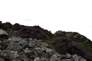 Rock and Heather Foreground PNG.. by AledJonesDigitalArt
