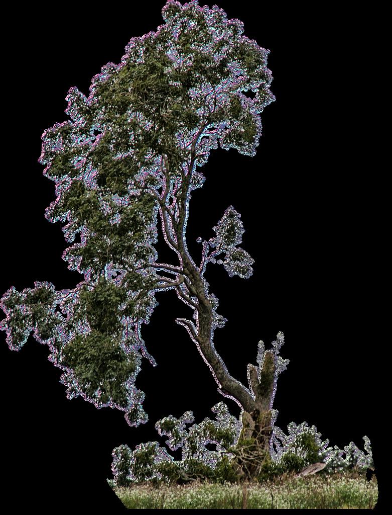 سكرابز اشجار صور اشجار للتصميم سكرابز شجر png صور اشجار cut_out_tree_stock_01_sept_2016___by_aledjonesstocknart-dago3ob.png