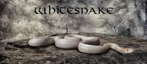 Whitesnake.. by AledJonesDigitalArt