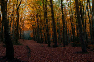 Autumn Forest stock.. by AledJonesDigitalArt