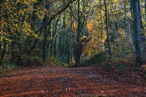 Autumn scene Stock November 2016.. by AledJonesDigitalArt