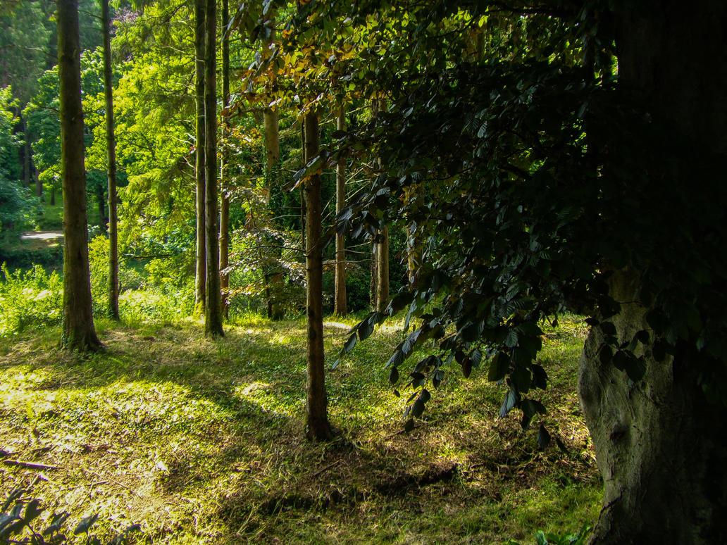 forest Stock 02 June 2017.. by AledJonesStockNArt