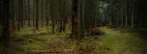Dark Forest.. by AledJonesDigitalArt