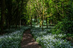 Forest Scene Stock 01 May 2018