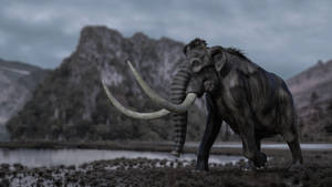 Mammoth..