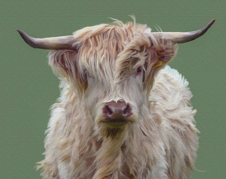 White Highland Cow Smudge Painting.. by AledJonesDigitalArt