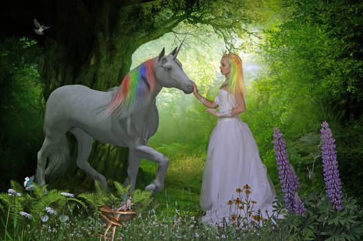 Enchanted Forest..