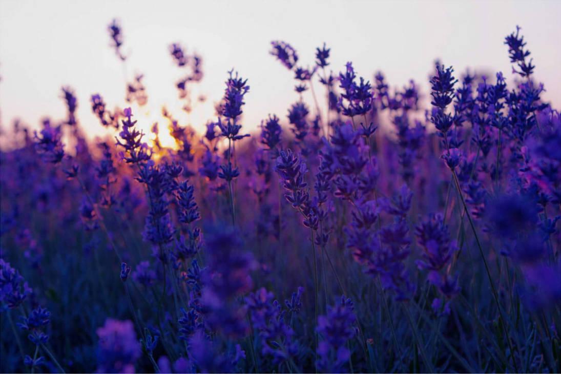 lavender background color - HD2560×1440