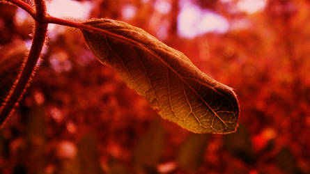 red Leaf by the-undrawable