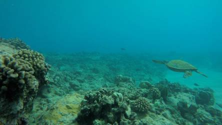 Sea Turtle Landscape