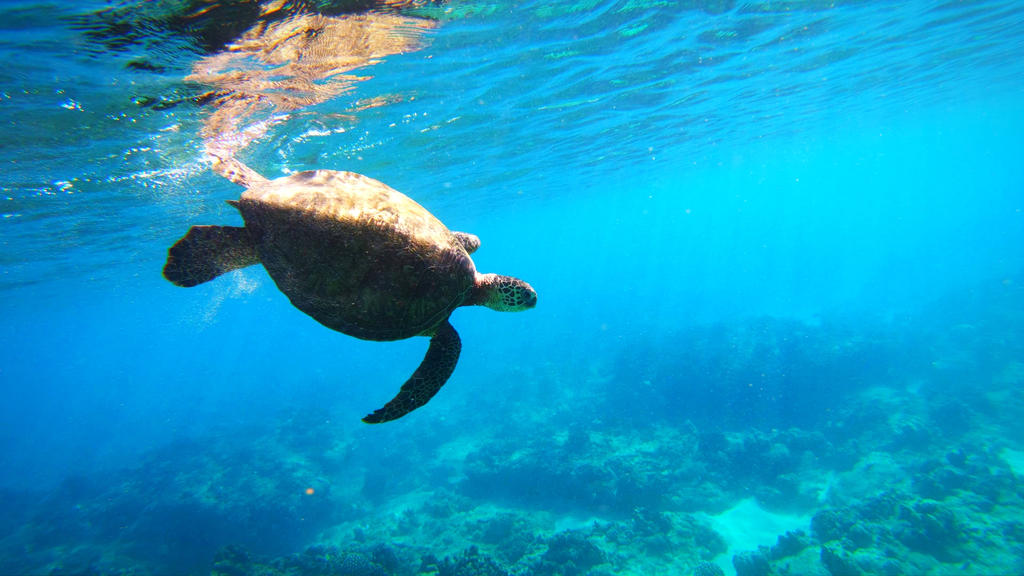 Dive! Dive! Dive! Green Sea Turtle by Raulboy