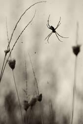 Melancholic Spider by GiorgosMaravelakis