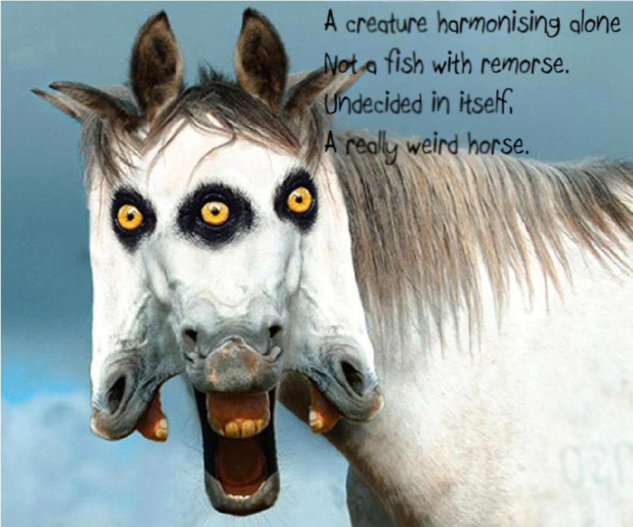 Weird Horse Pictures 8