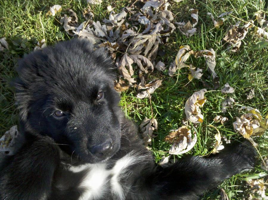 Puppy Love by MewCutie