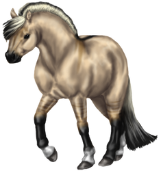 Quin: Fjord Stallion by SilvanonOfTheOrchard
