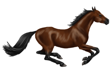 Quin: Thoroughbred Mare by SilvanonOfTheOrchard