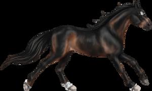Quin: Thoroughbred Stallion