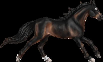 Quin: Thoroughbred Stallion by SilvanonOfTheOrchard