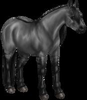 Quin: Quarter Horse Mare