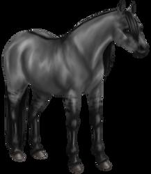 Quin: Quarter Horse Mare by SilvanonOfTheOrchard
