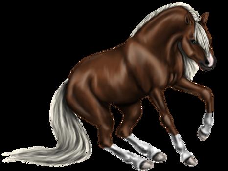 Quin: Quarter Horse Stallion