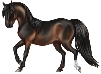 Quin: Morgan Stallion by SilvanonOfTheOrchard