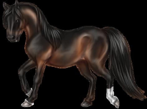 Quin: Morgan Stallion