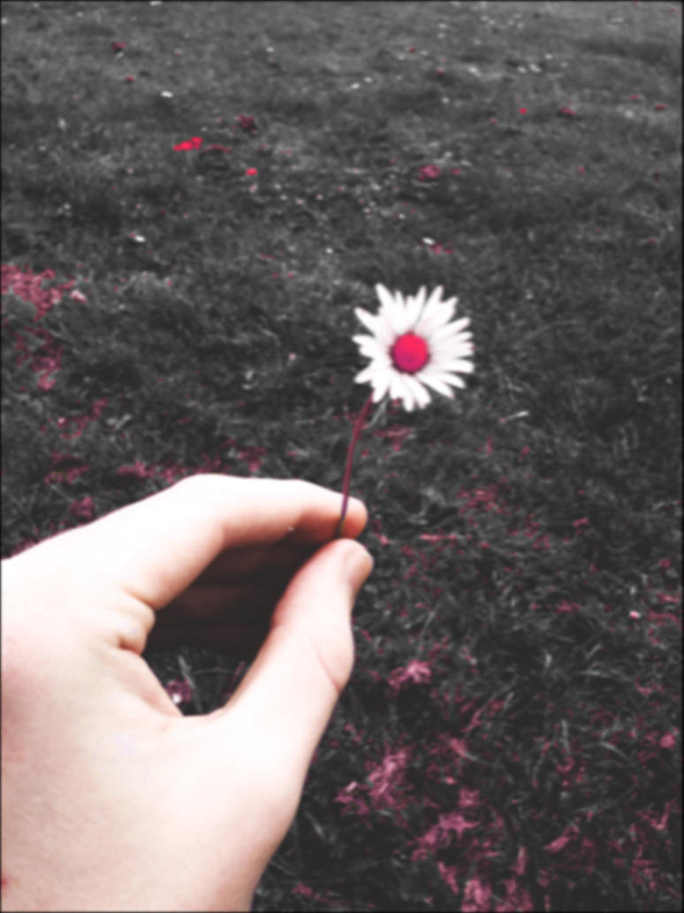 IMG_0520: Crimson Daisy by MarmaladeSunshine