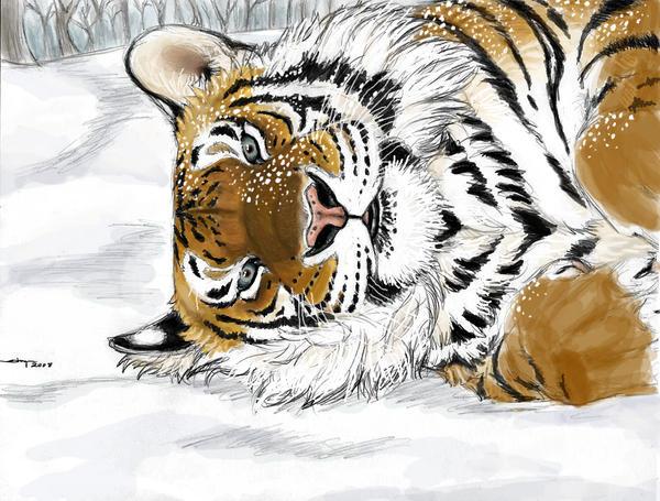 Amur Tiger by ebonytigress