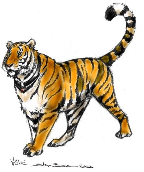 Ynobe Tigress Colored by ebonytigress