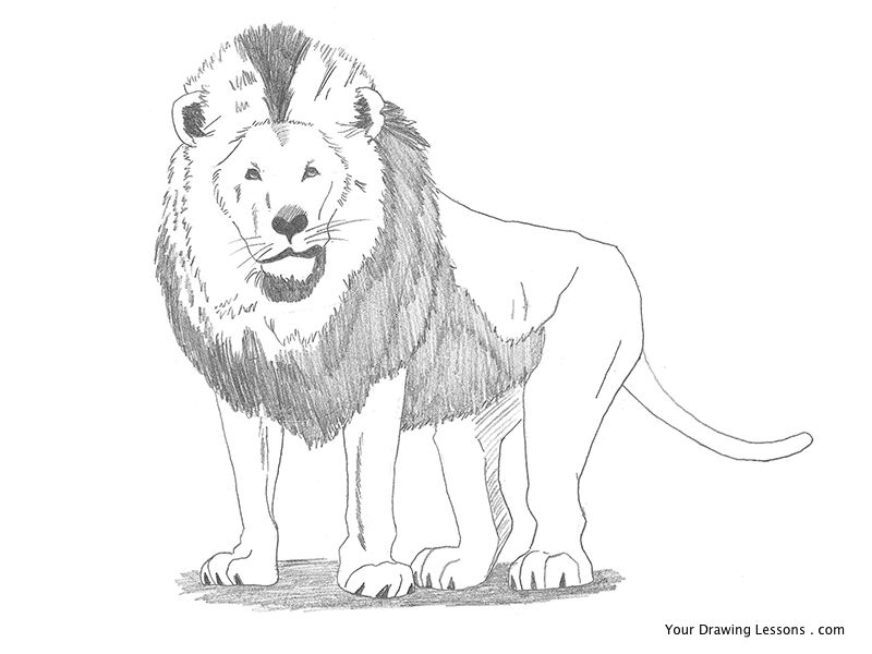 Lion pencil drawing by mattleyva