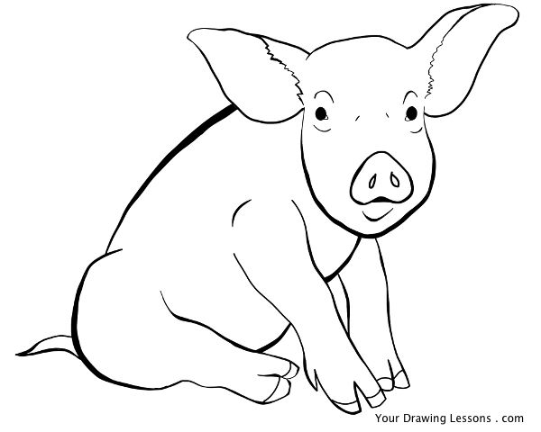 pig line drawing by mattleyva