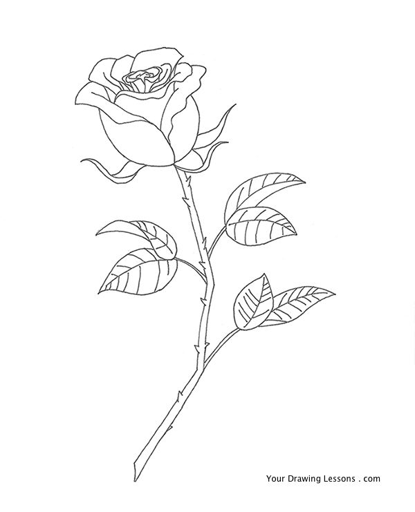 Pen-and-ink-rose-drawing by MattLeyvaSomeone Drawing A Flower