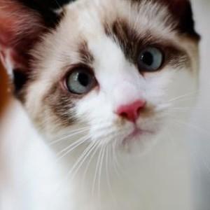 Jinja's Profile Picture