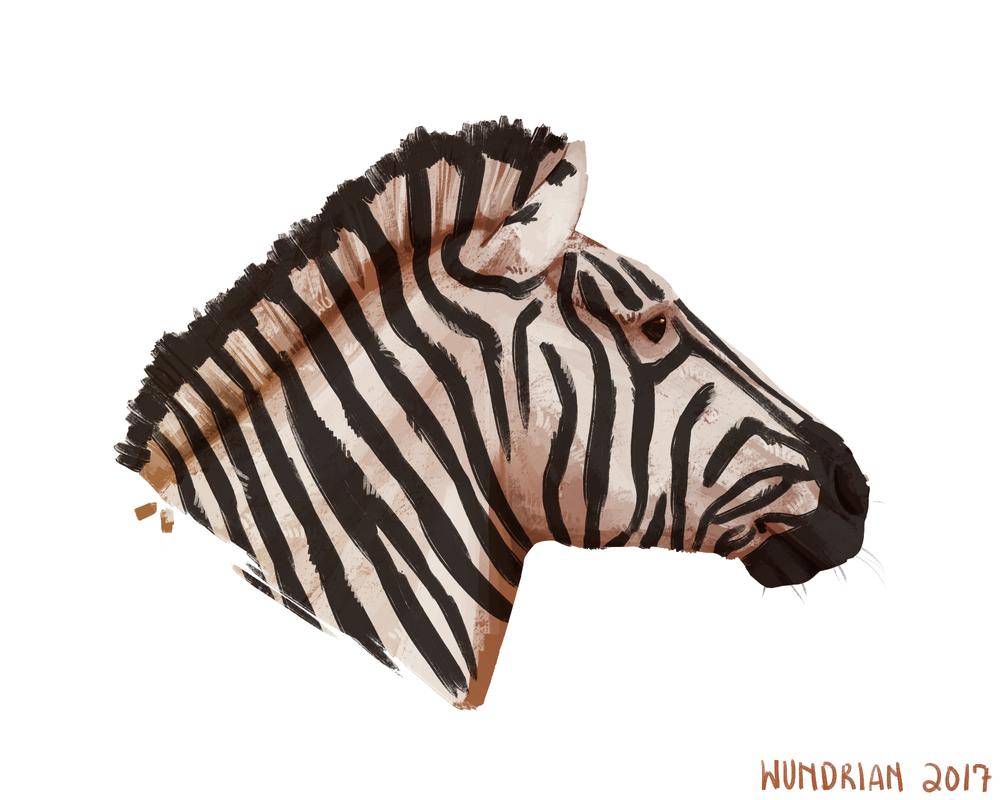 Daily Sketch #23 - Zebra Portrait by Wundrian