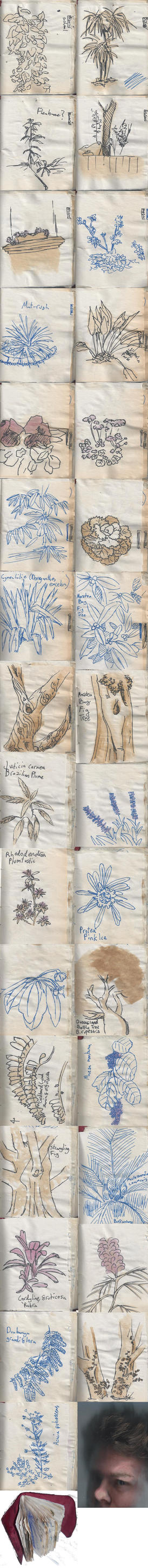 Sketchbook - The local Flora pt 2 by SirFerrick