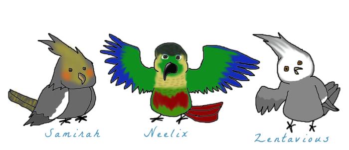 Cartoon Parrots by Dinos-Go-Rawr