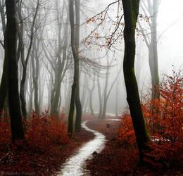 Scarlet Forest