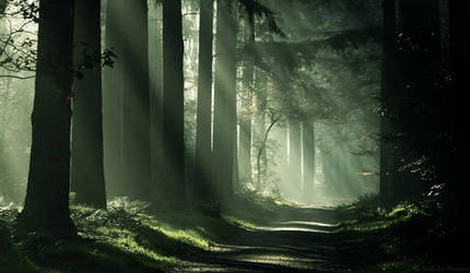 Dark Shadows by Nelleke
