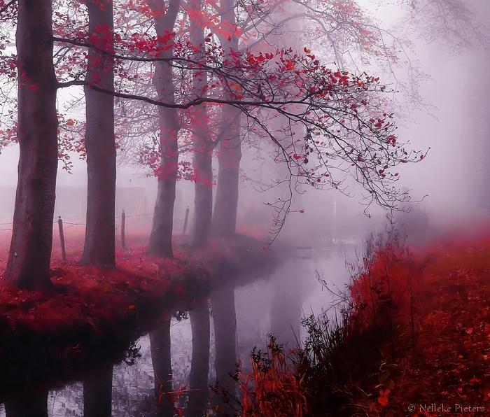 Dark Valentine by Nelleke
