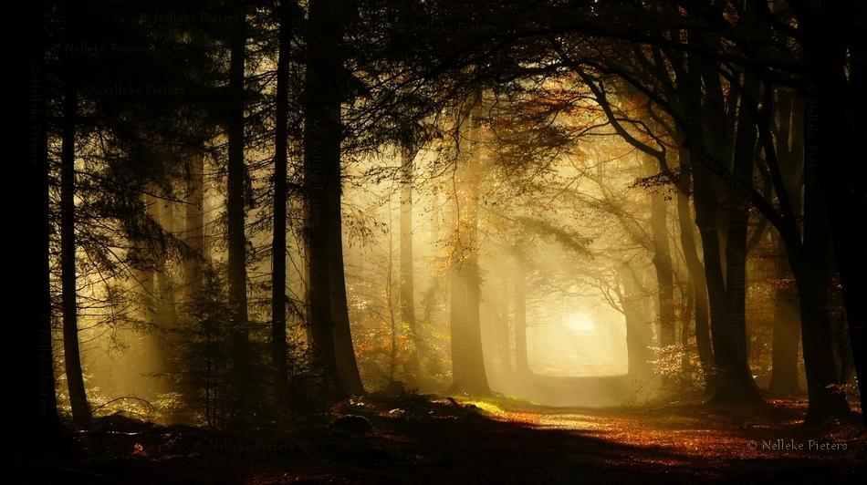The Secret Forest by Nelleke