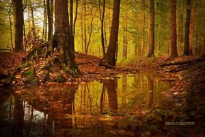 Autumn Textures by Nelleke