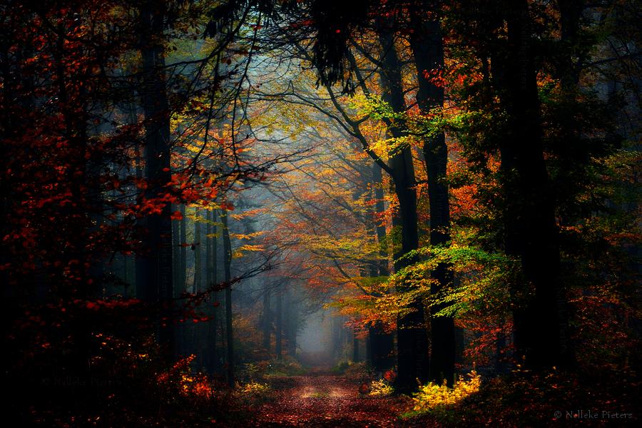 Secret Places by Nelleke