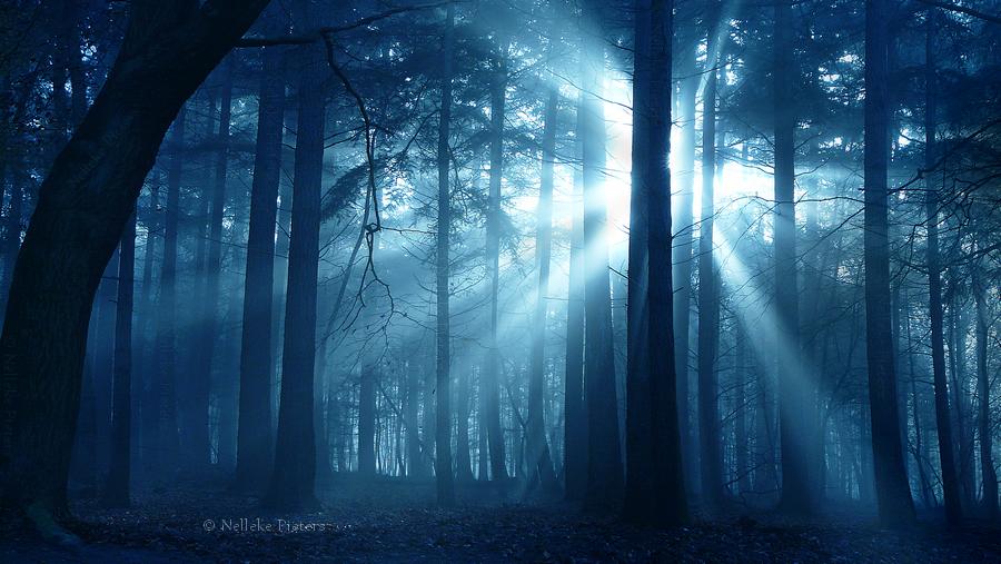 ShadowLight by Nelleke