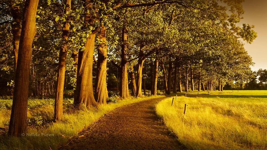The Rocky Road by Nelleke