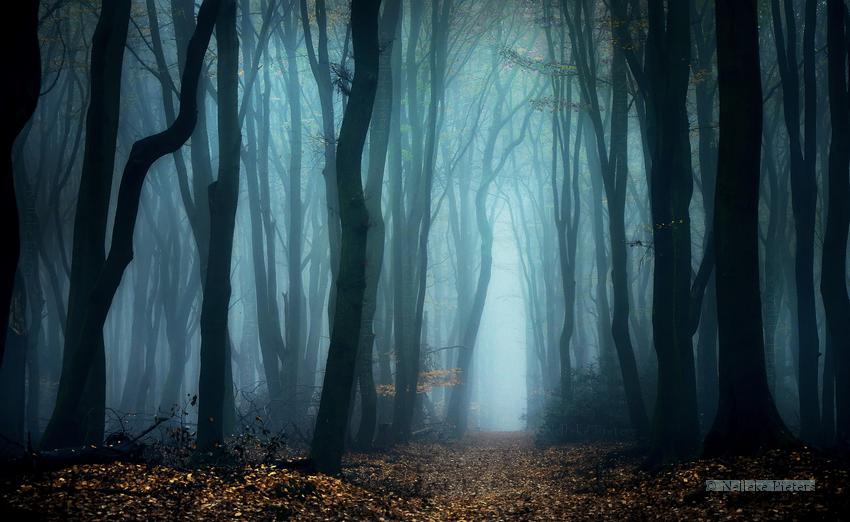 Of Ghosts by Nelleke