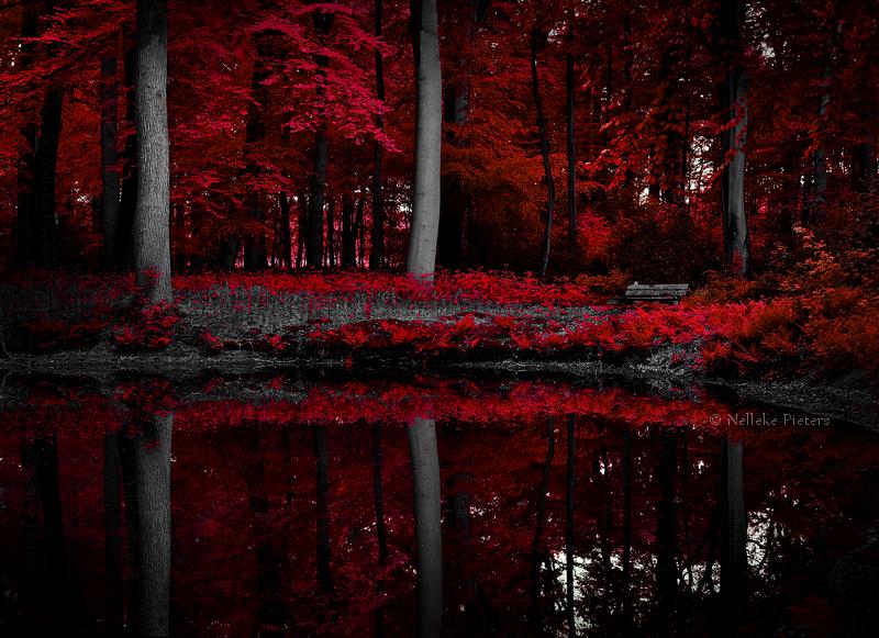 Scarlet Lake II by Nelleke