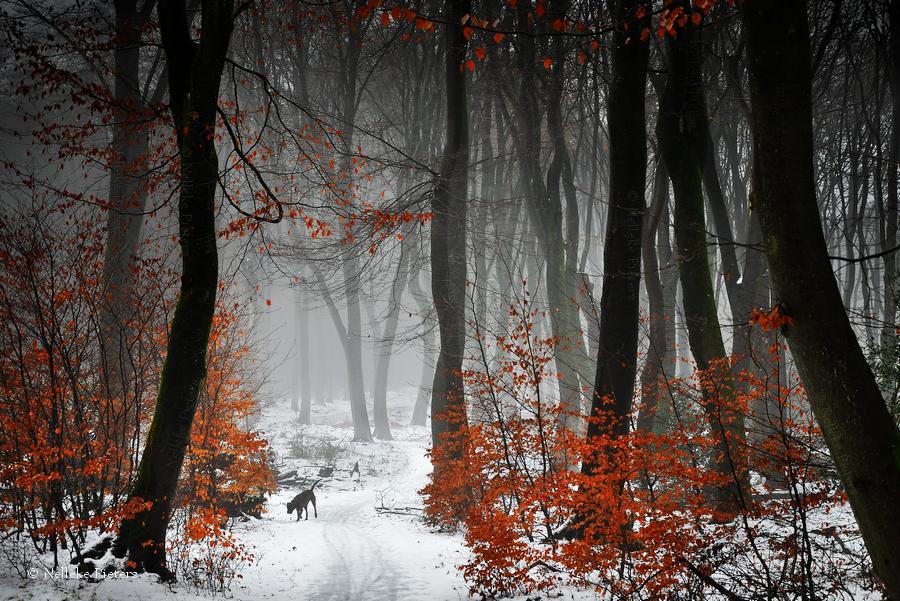 Reds by Nelleke